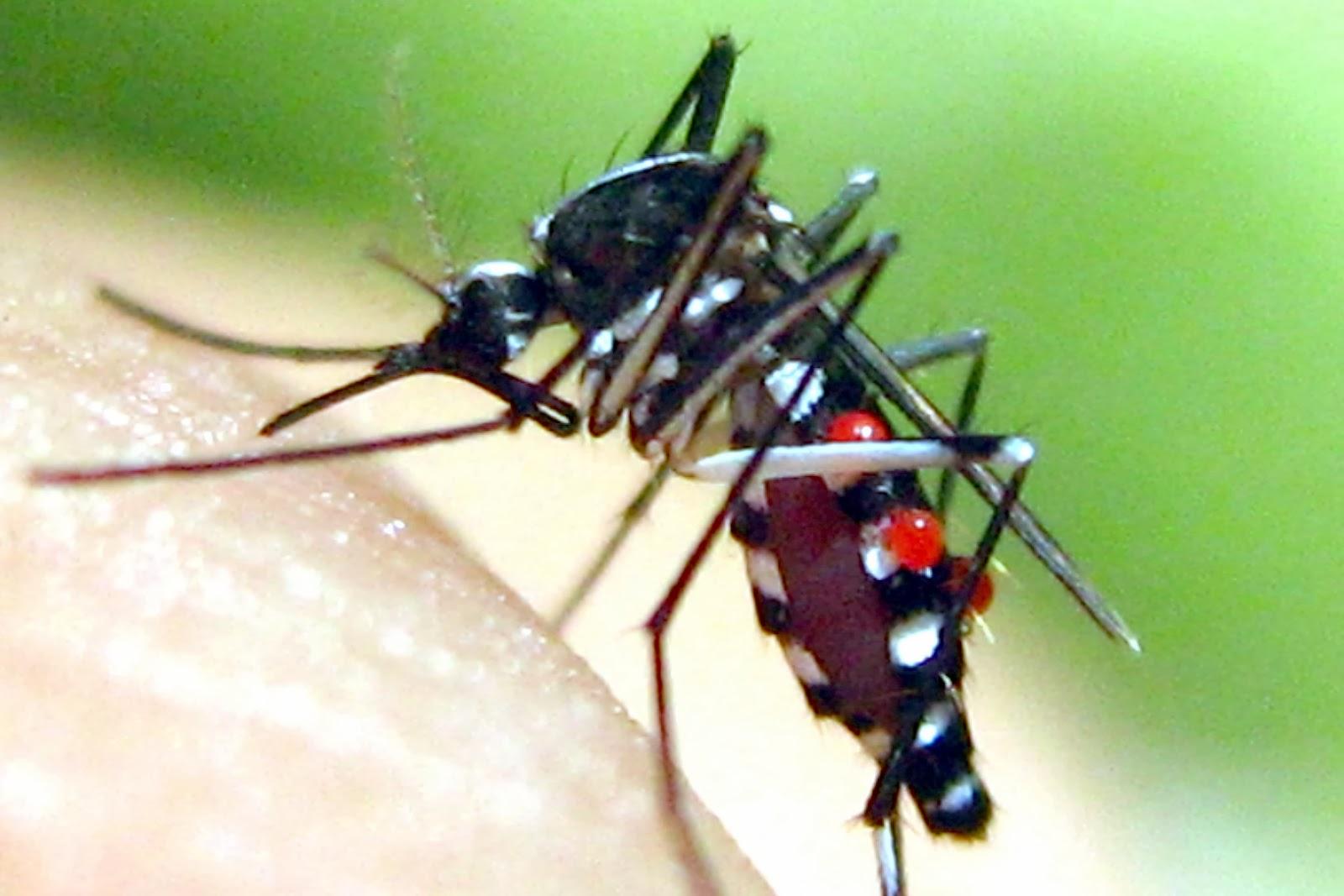 Có thể tự mình phun thuốc diệt muỗi cho gia đình được không (2)
